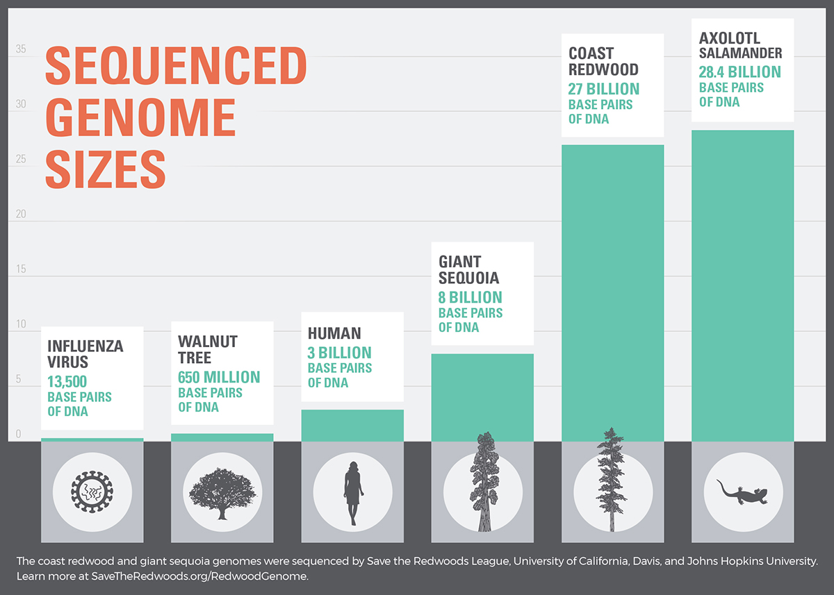 Redwood Genome